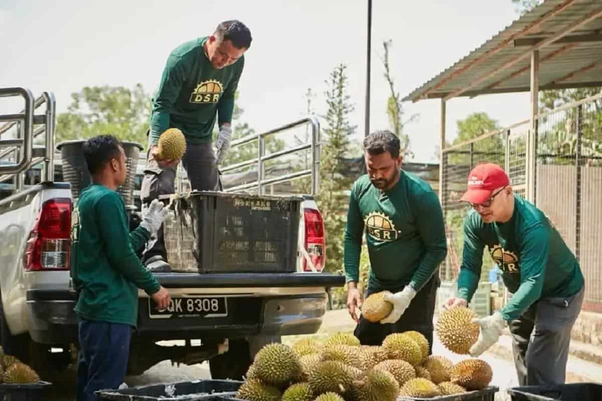 DSR Fruits aims to pool durian smallholders for sustainable year-round income